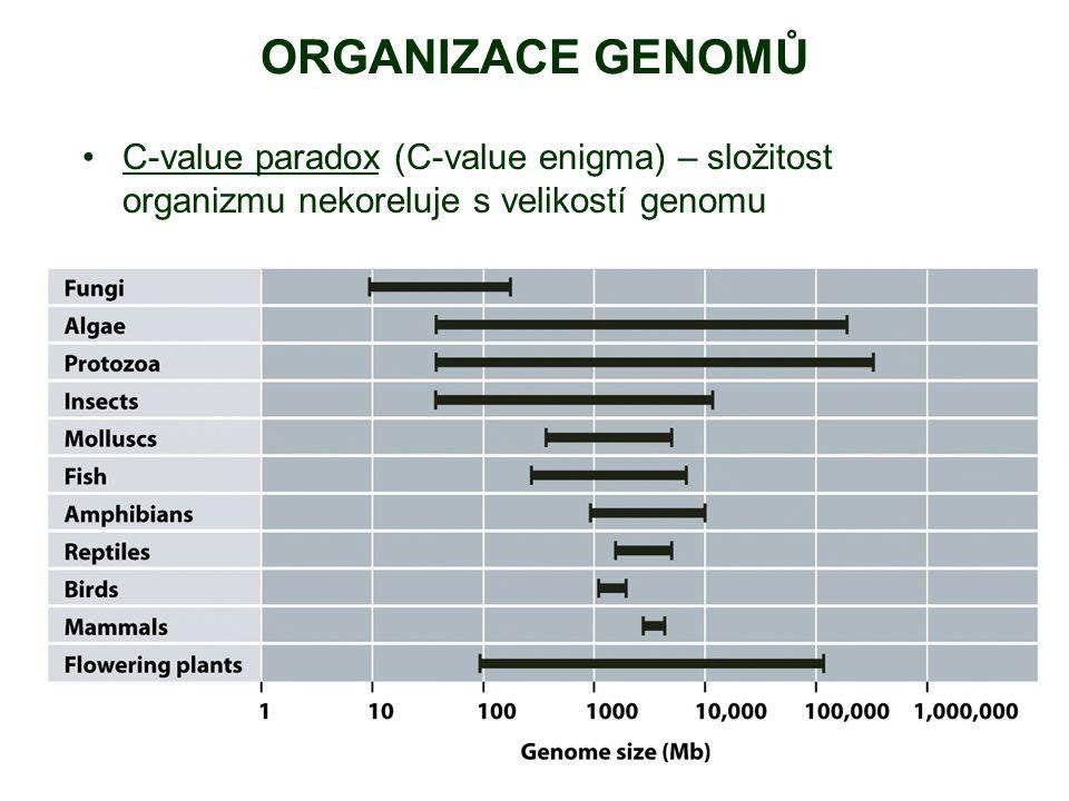 ORGANIZACE GENOMŮ C-value paradox (C-value enigma) – složitost organizmu nekoreluje s velikostí genomu.