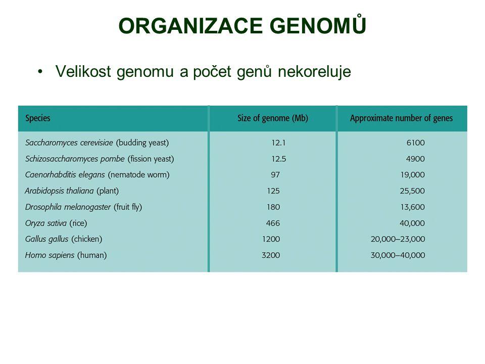 ORGANIZACE GENOMŮ Velikost genomu a počet genů nekoreluje
