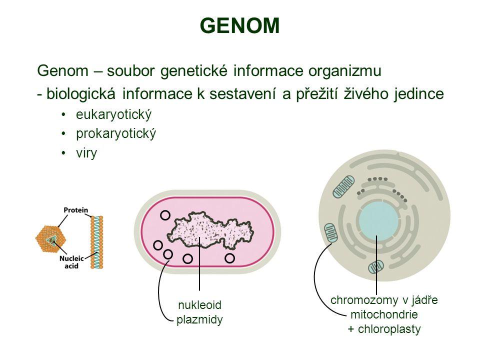 GENOM Genom – soubor genetické informace organizmu