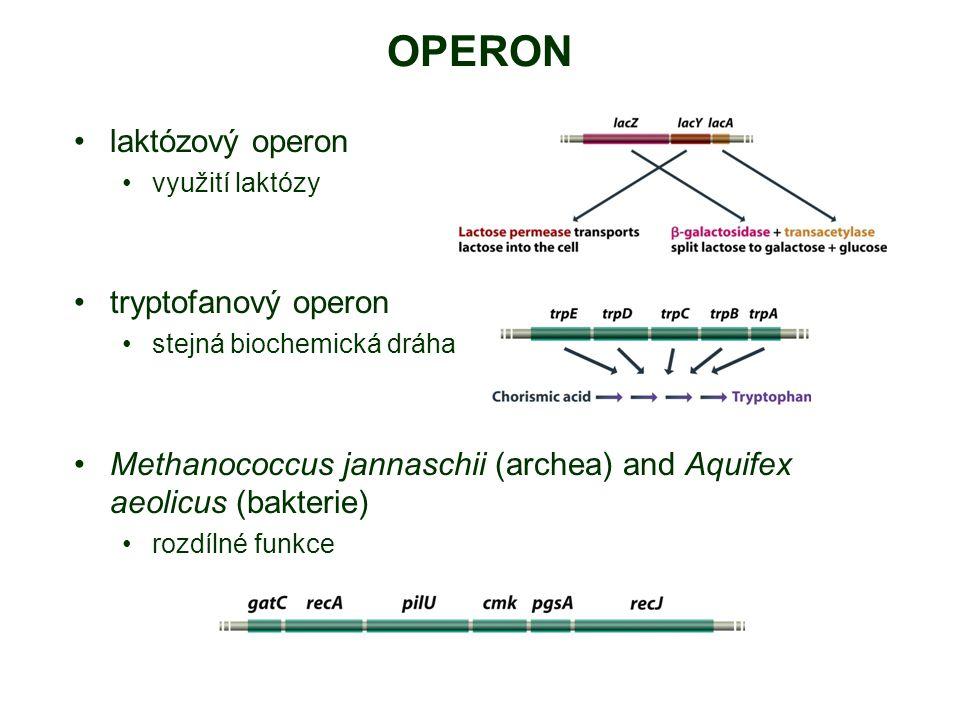 OPERON laktózový operon tryptofanový operon