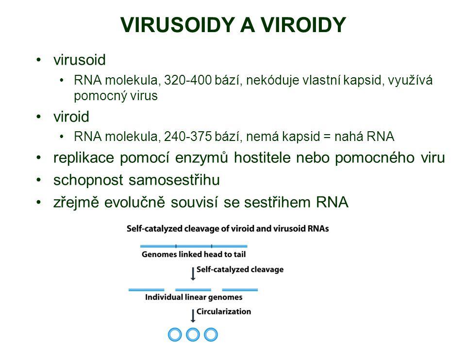 VIRUSOIDY A VIROIDY virusoid viroid