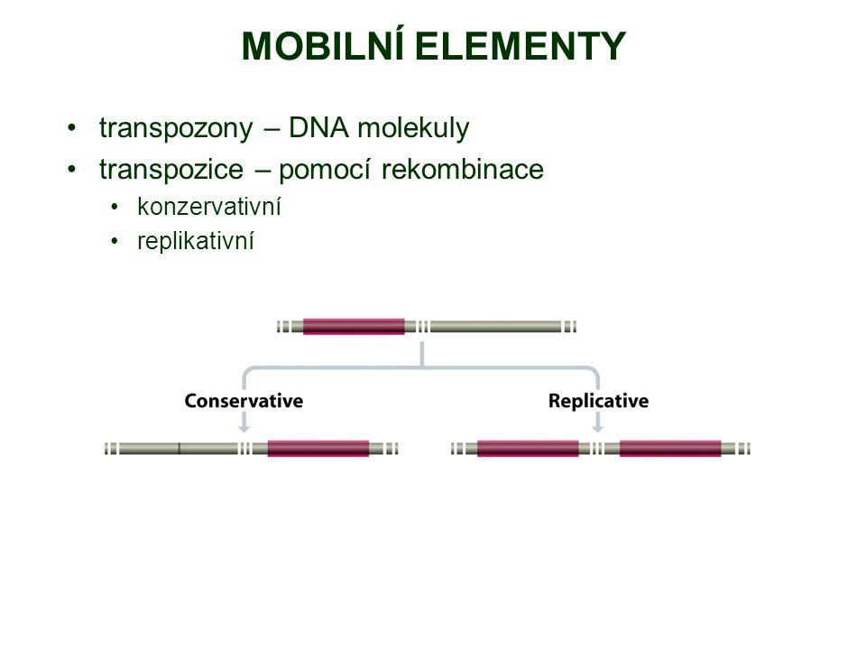 MOBILNÍ ELEMENTY transpozony – DNA molekuly
