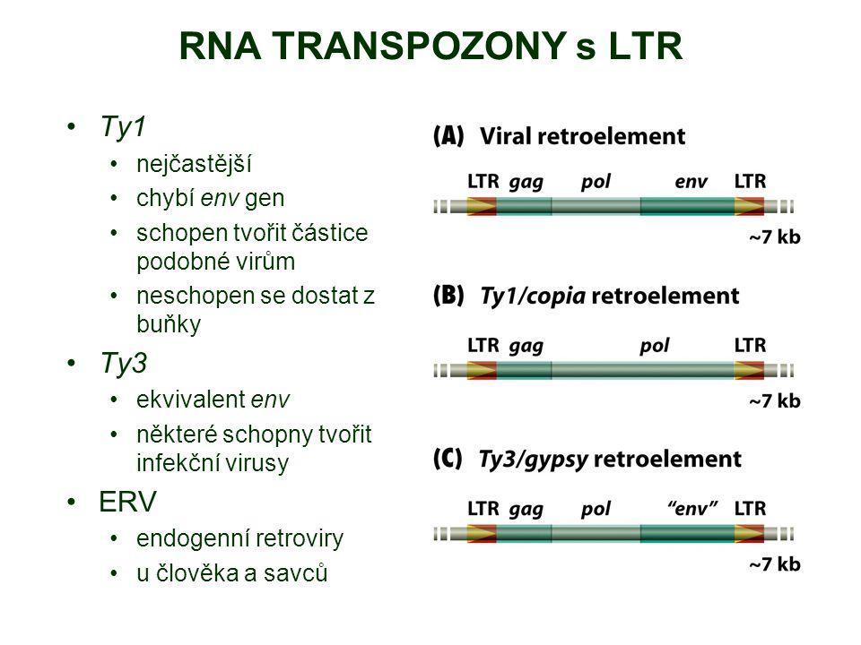 RNA TRANSPOZONY s LTR Ty1 Ty3 ERV nejčastější chybí env gen