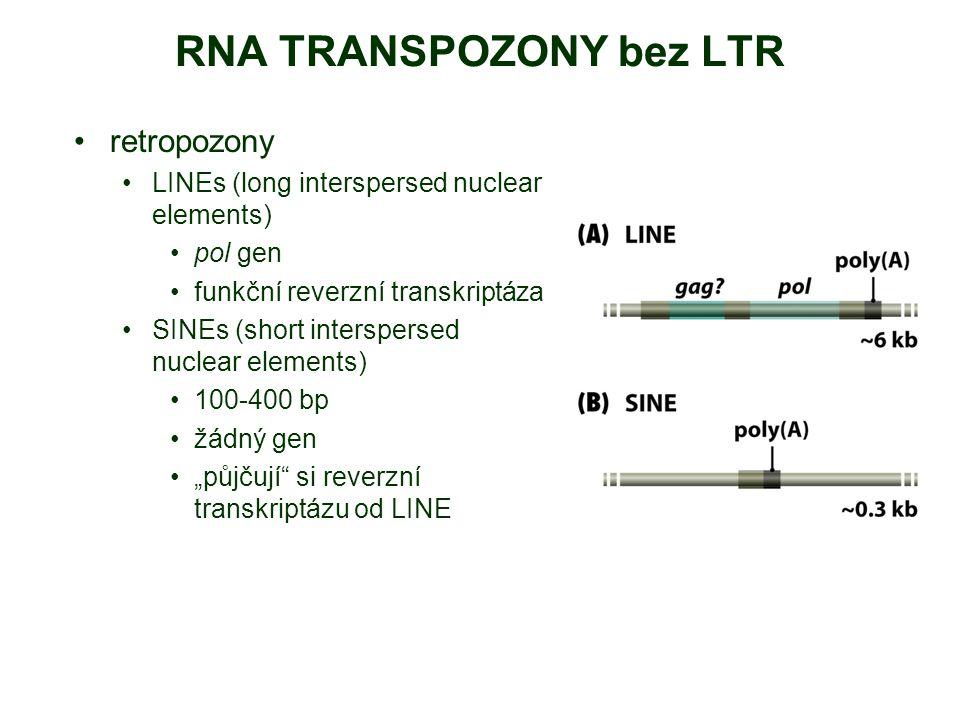 RNA TRANSPOZONY bez LTR