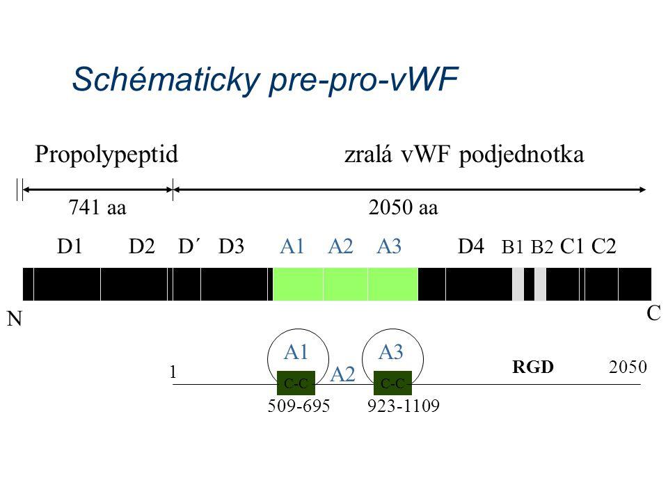Schématicky pre-pro-vWF