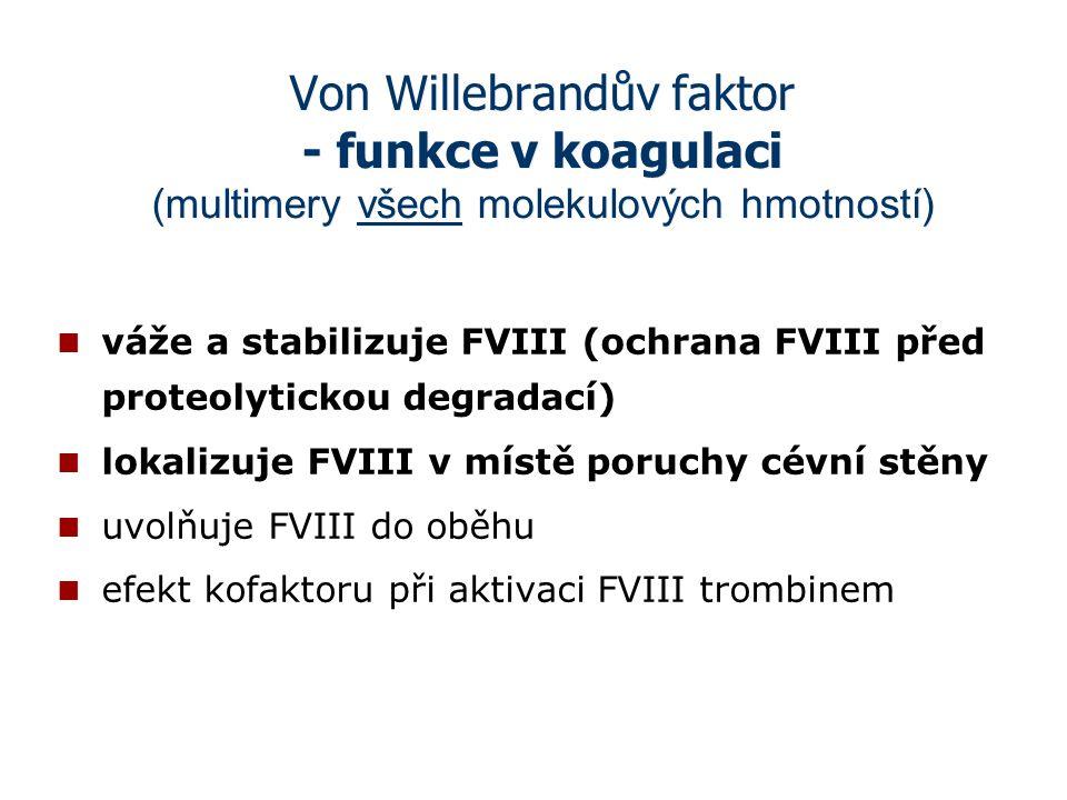 Von Willebrandův faktor - funkce v koagulaci (multimery všech molekulových hmotností)