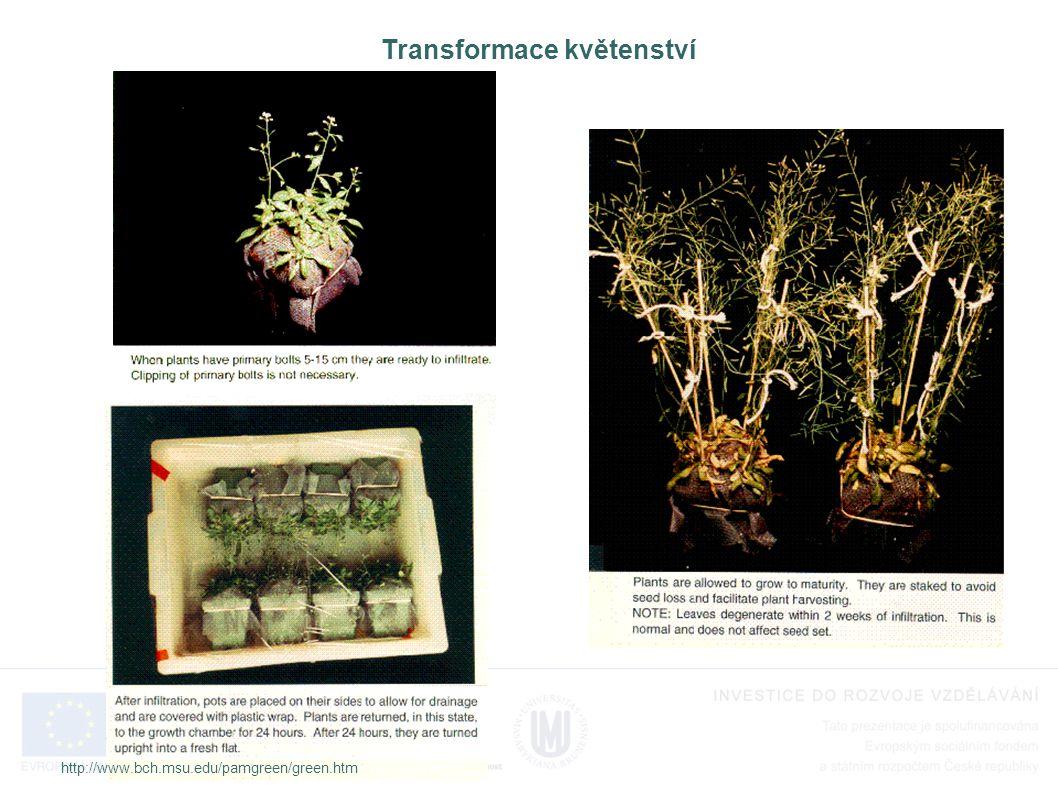 Transformace květenství