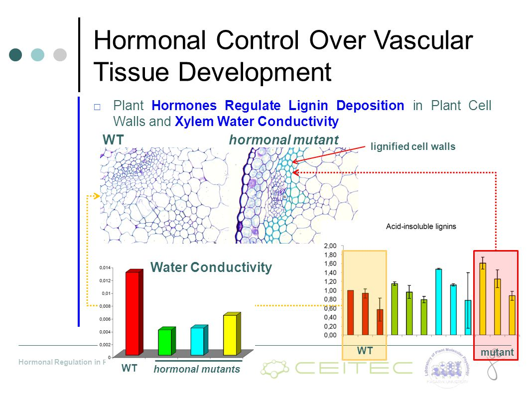 Hormonal Control Over Vascular Tissue Development