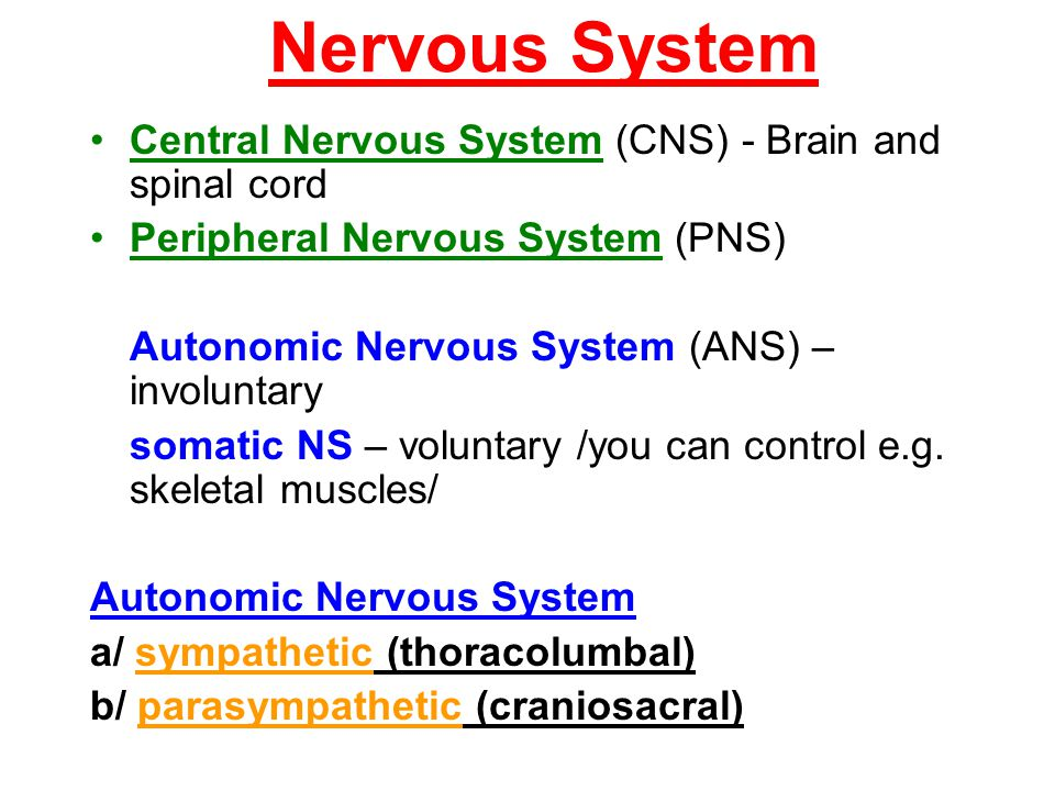 Nervous System Central Nervous System (CNS) - Brain and spinal cord