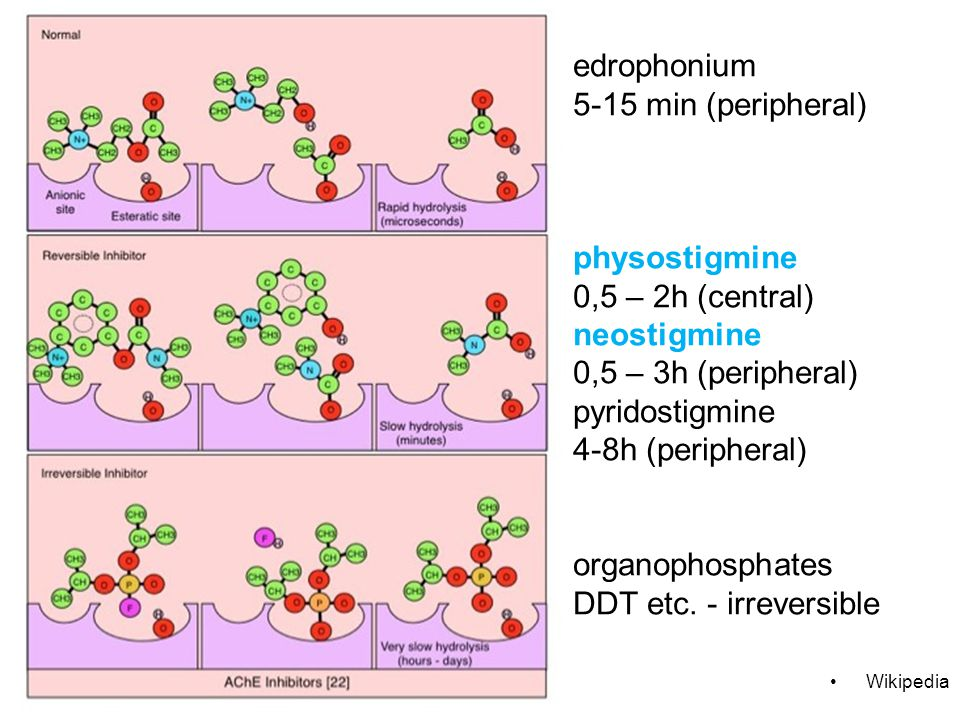 edrophonium 5-15 min (peripheral) physostigmine 0,5 – 2h (central) neostigmine 0,5 – 3h (peripheral) pyridostigmine 4-8h (peripheral) organophosphates DDT etc. - irreversible