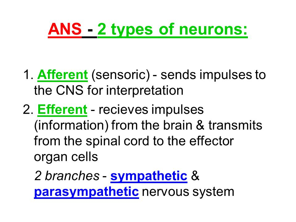 ANS - 2 types of neurons: 1. Afferent (sensoric) - sends impulses to the CNS for interpretation.