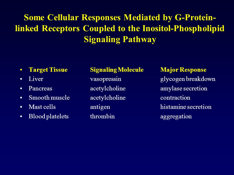 Some Cellular Responses Mediated by G-Protein-linked Receptors Coupled to the Inositol-Phospholipid Signaling Pathway