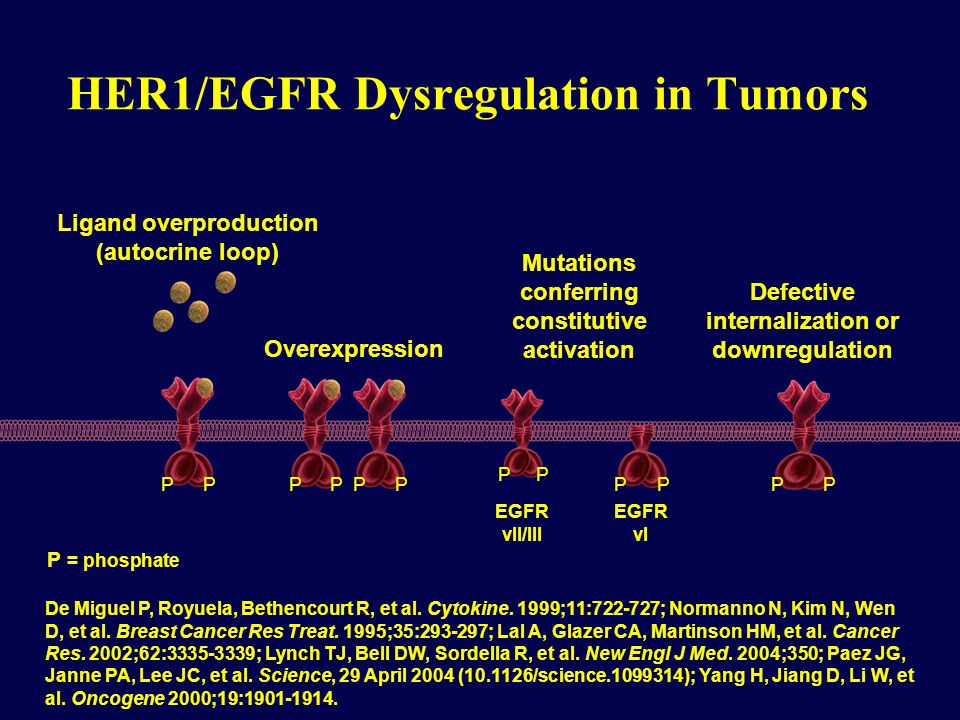 HER1/EGFR Dysregulation in Tumors