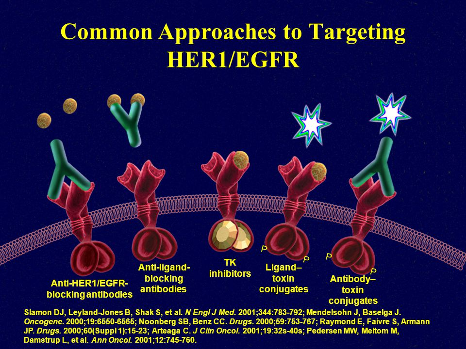 Common Approaches to Targeting HER1/EGFR