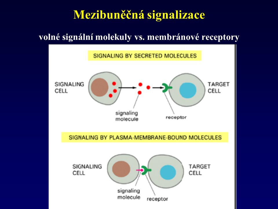 Mezibuněčná signalizace volné signální molekuly vs