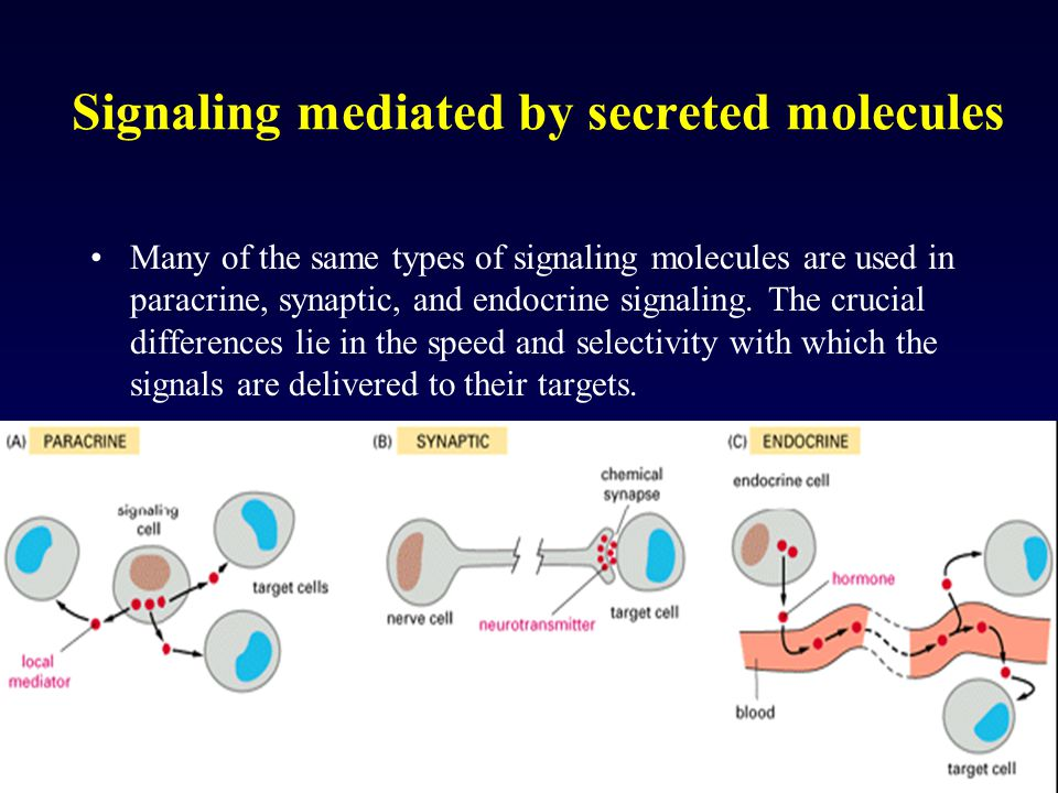 Signaling mediated by secreted molecules