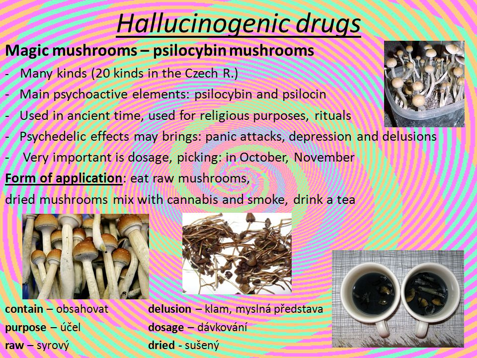 Hallucinogenic drugs Magic mushrooms – psilocybin mushrooms