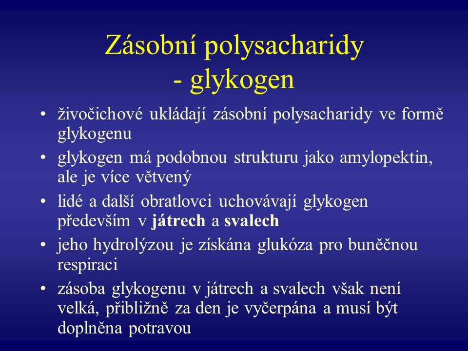 Zásobní polysacharidy - glykogen