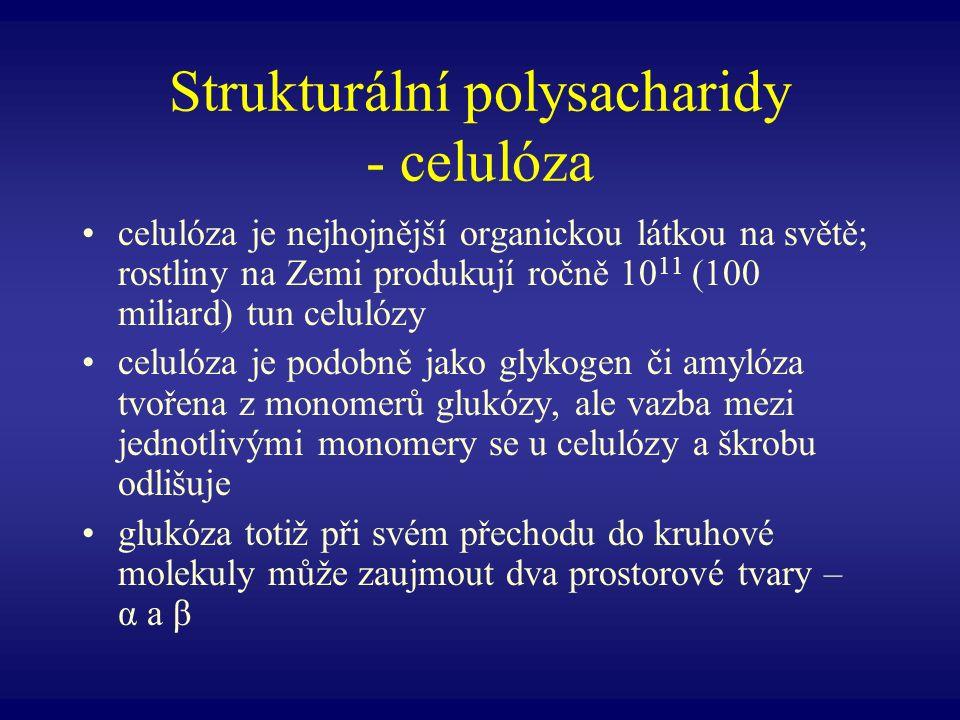 Strukturální polysacharidy - celulóza