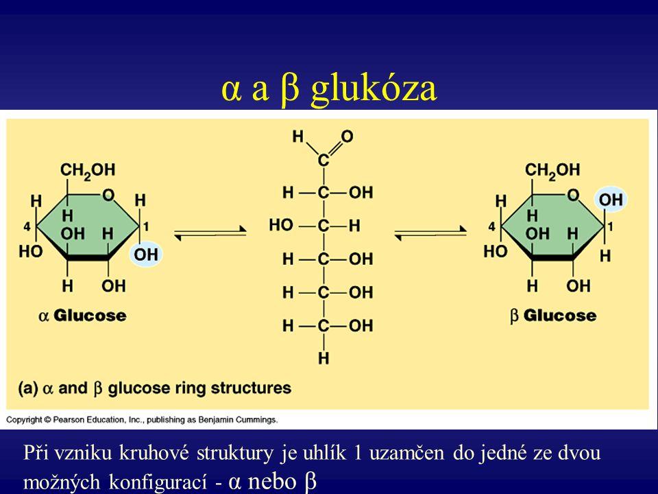 α a β glukóza Při vzniku kruhové struktury je uhlík 1 uzamčen do jedné ze dvou možných konfigurací - α nebo β.