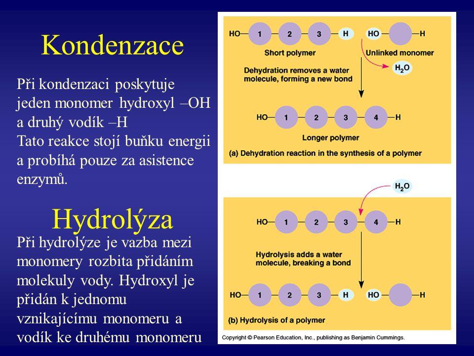 Kondenzace Hydrolýza Při kondenzaci poskytuje jeden monomer hydroxyl –OH a druhý vodík –H.