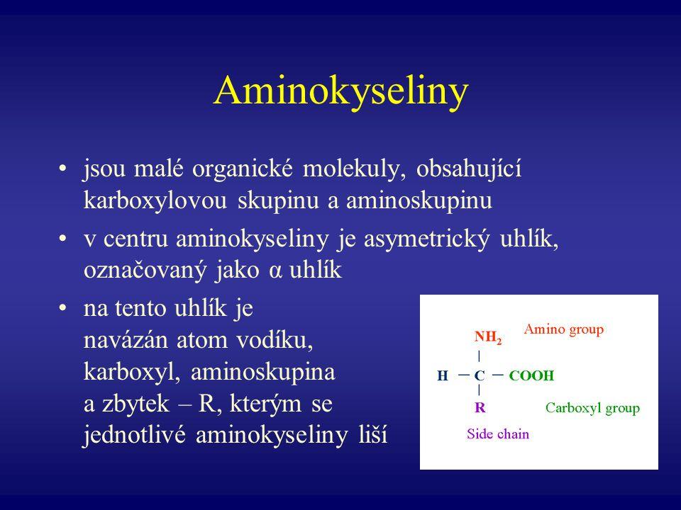 Aminokyseliny jsou malé organické molekuly, obsahující karboxylovou skupinu a aminoskupinu.