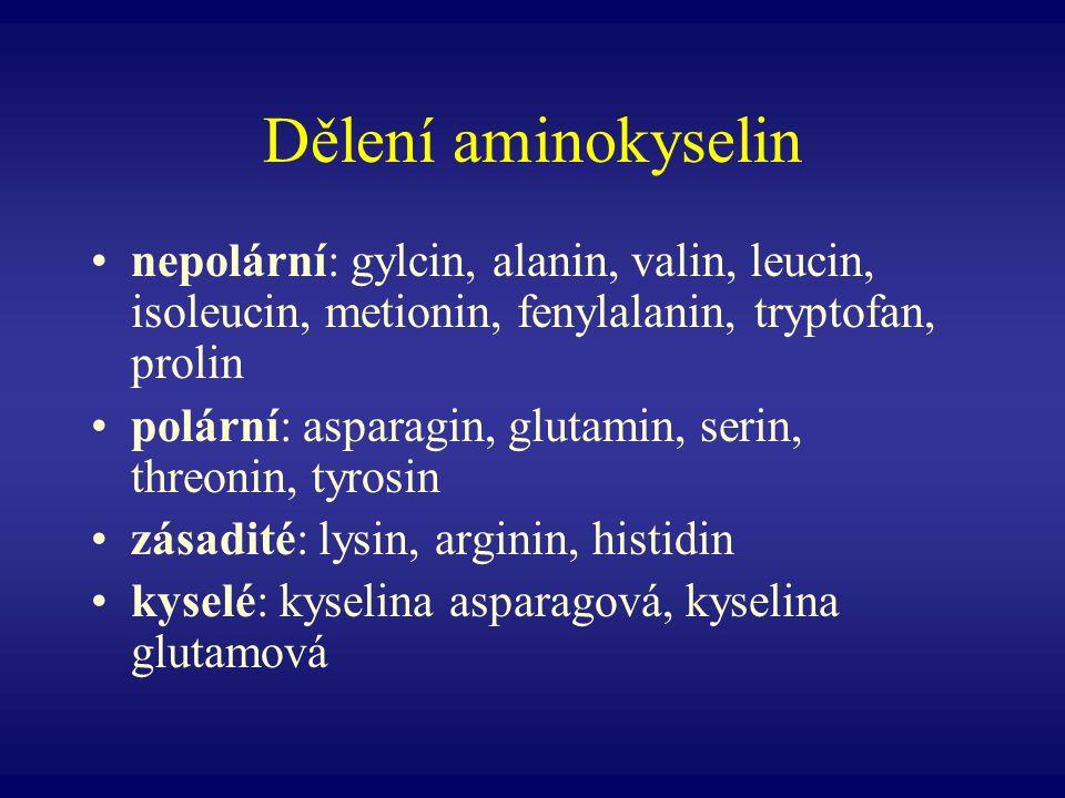 Dělení aminokyselin nepolární: gylcin, alanin, valin, leucin, isoleucin, metionin, fenylalanin, tryptofan, prolin.