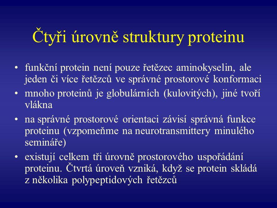 Čtyři úrovně struktury proteinu