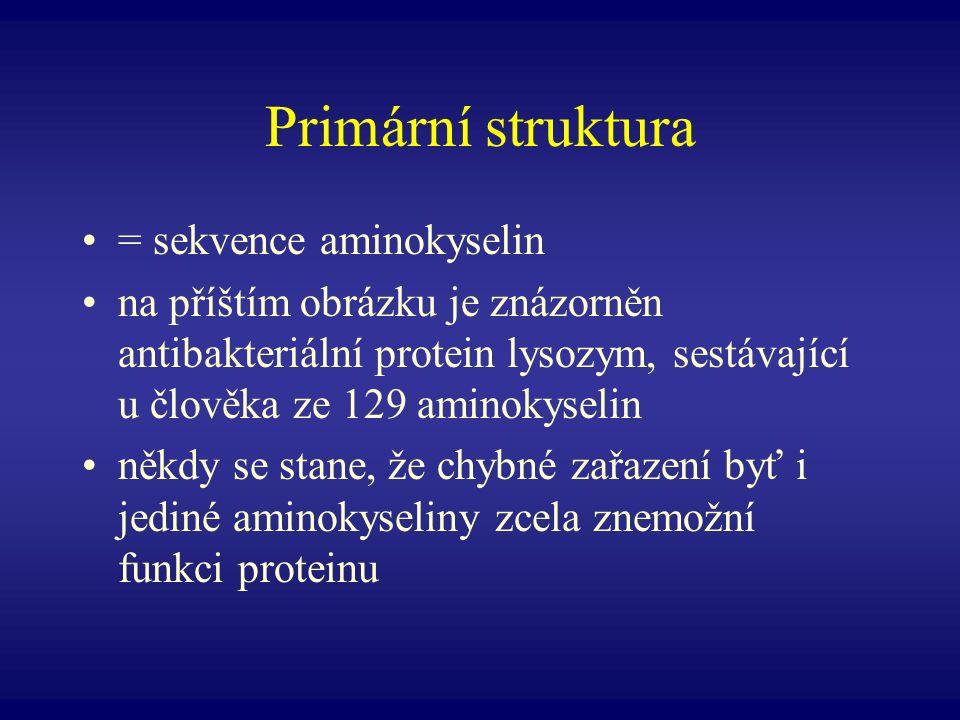 Primární struktura = sekvence aminokyselin