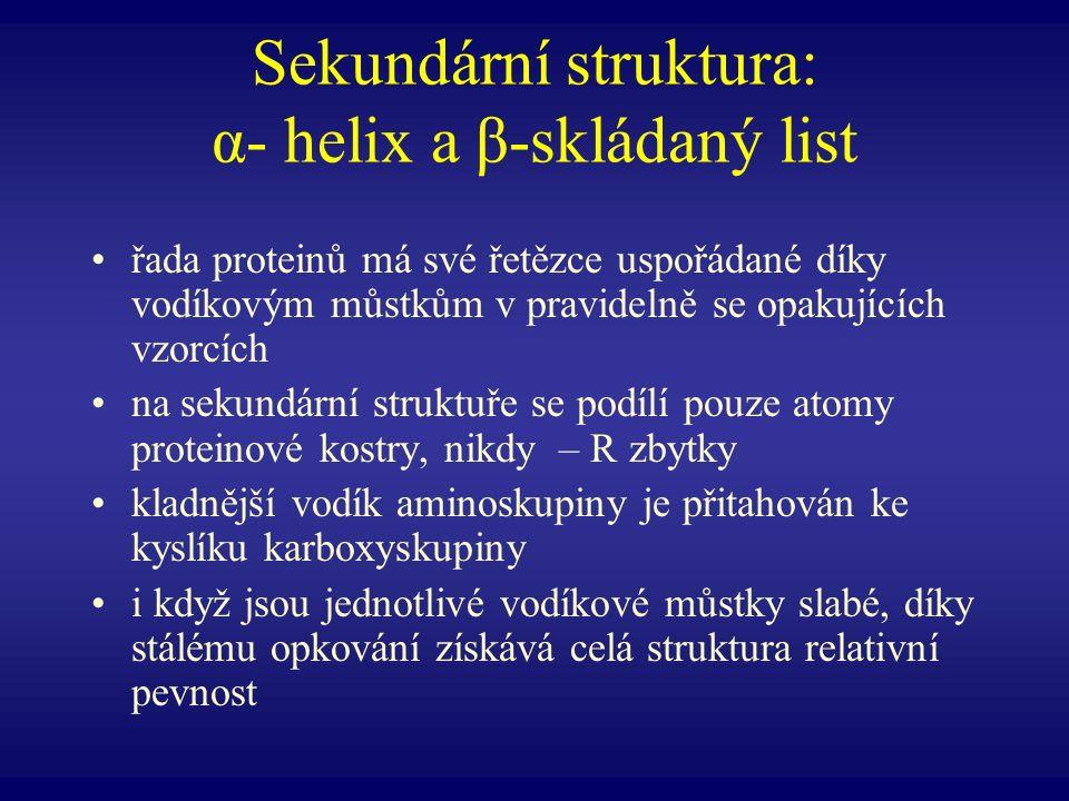 Sekundární struktura: α- helix a β-skládaný list