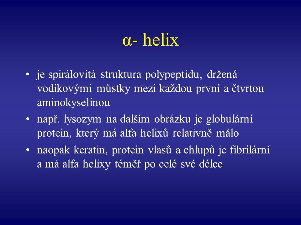 α- helix je spirálovitá struktura polypeptidu, držená vodíkovými můstky mezi každou první a čtvrtou aminokyselinou.