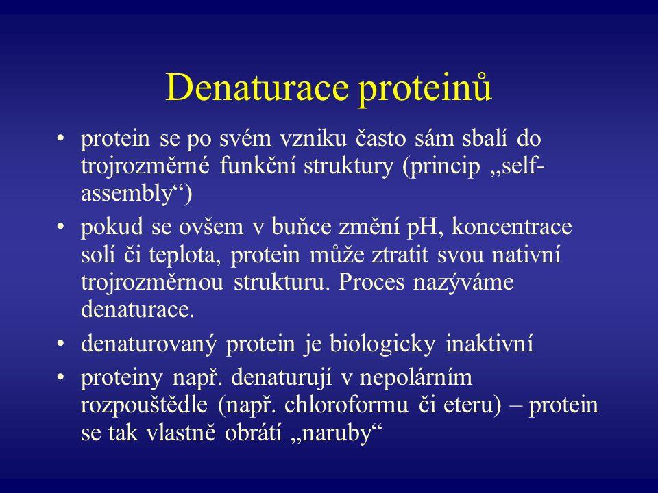 """Denaturace proteinů protein se po svém vzniku často sám sbalí do trojrozměrné funkční struktury (princip """"self-assembly )"""