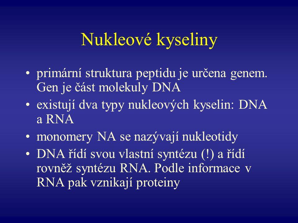 Nukleové kyseliny primární struktura peptidu je určena genem. Gen je část molekuly DNA. existují dva typy nukleových kyselin: DNA a RNA.
