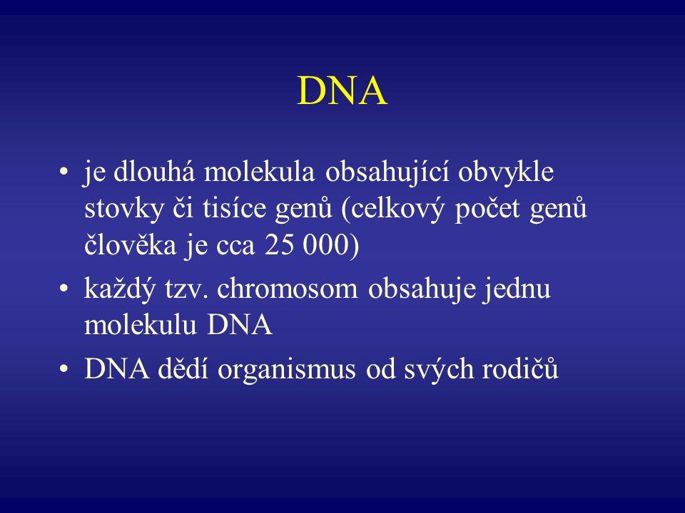 DNA je dlouhá molekula obsahující obvykle stovky či tisíce genů (celkový počet genů člověka je cca 25 000)
