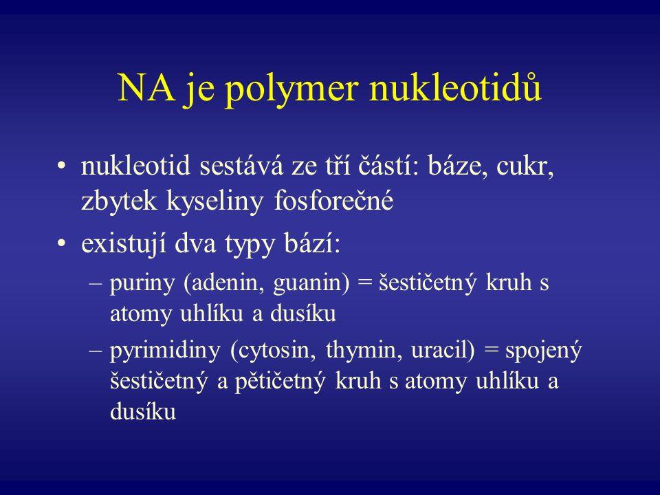 NA je polymer nukleotidů