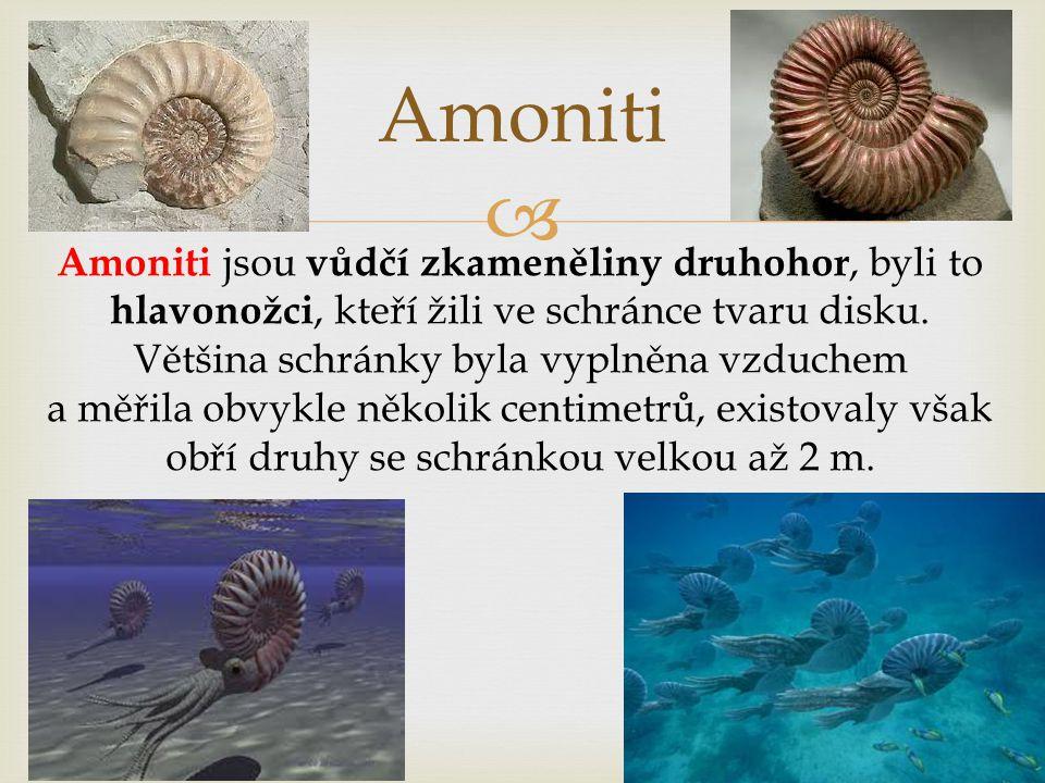 Amoniti