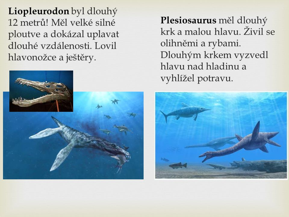 Liopleurodon byl dlouhý 12 metrů