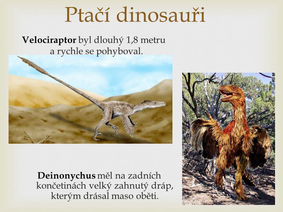 Velociraptor byl dlouhý 1,8 metru a rychle se pohyboval.