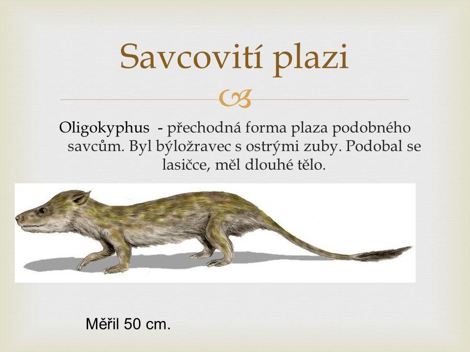 Savcovití plazi Oligokyphus - přechodná forma plaza podobného savcům. Byl býložravec s ostrými zuby. Podobal se lasičce, měl dlouhé tělo.