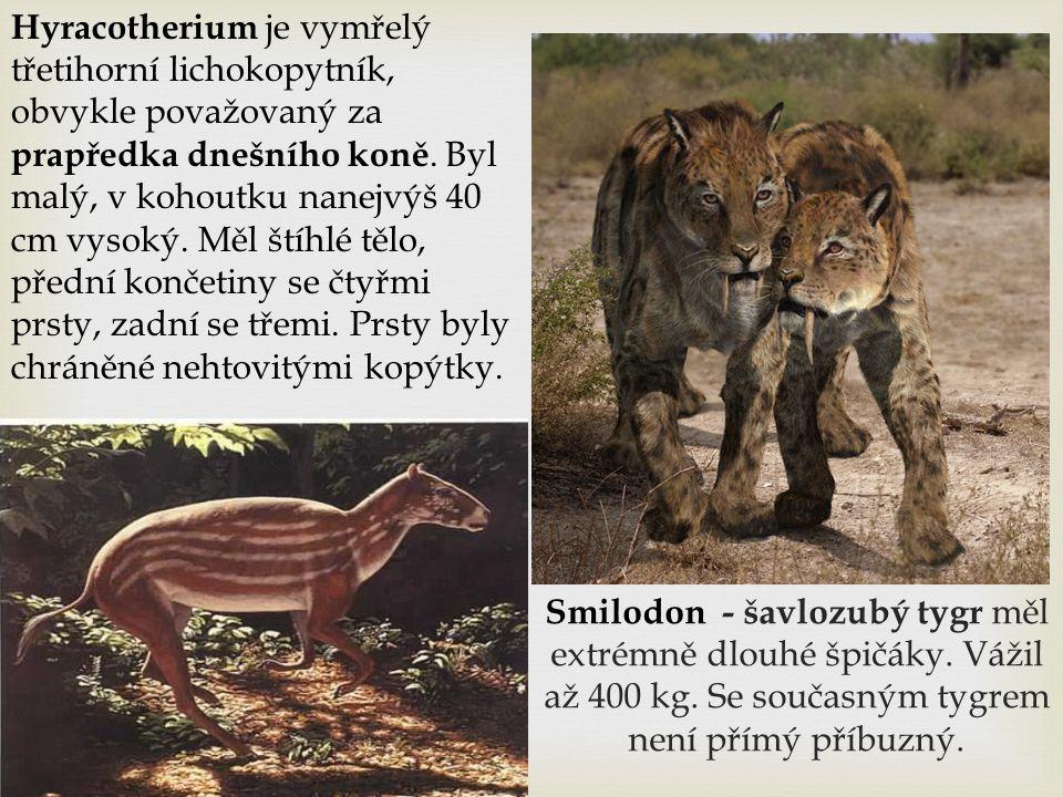Hyracotherium je vymřelý třetihorní lichokopytník, obvykle považovaný za prapředka dnešního koně. Byl malý, v kohoutku nanejvýš 40 cm vysoký. Měl štíhlé tělo, přední končetiny se čtyřmi prsty, zadní se třemi. Prsty byly chráněné nehtovitými kopýtky.