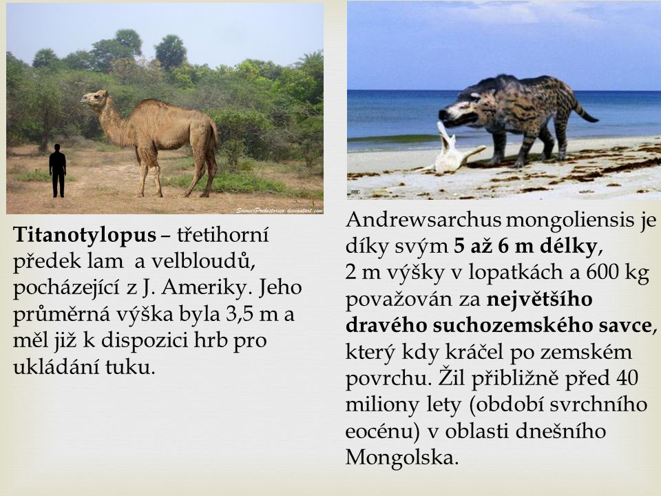 Andrewsarchus mongoliensis je díky svým 5 až 6 m délky, 2 m výšky v lopatkách a 600 kg považován za největšího dravého suchozemského savce, který kdy kráčel po zemském povrchu. Žil přibližně před 40 miliony lety (období svrchního eocénu) v oblasti dnešního Mongolska.