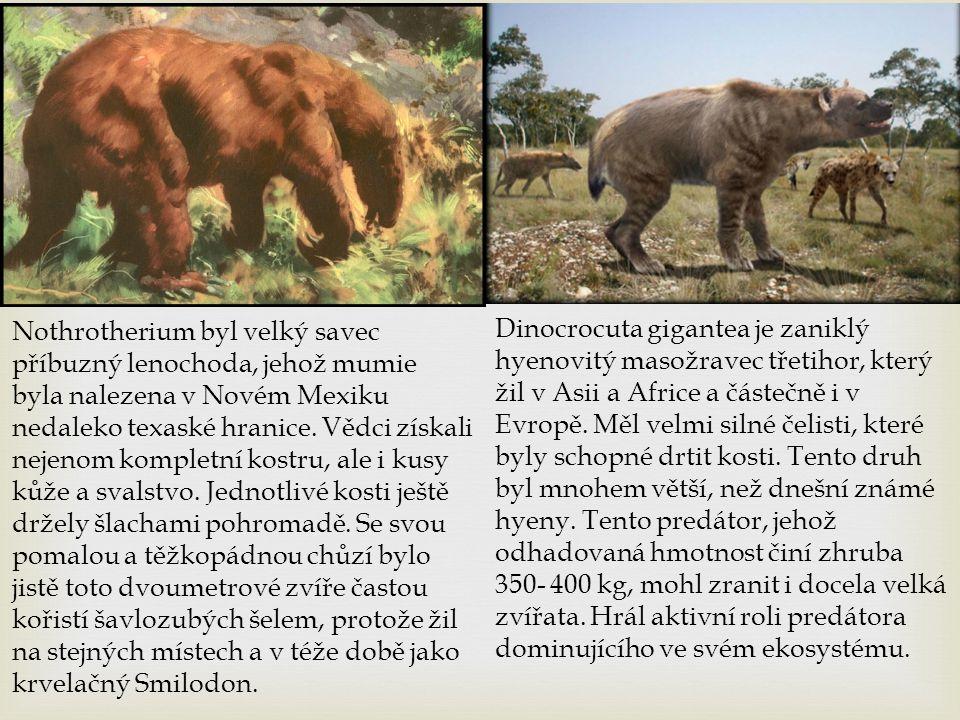 Nothrotherium byl velký savec příbuzný lenochoda, jehož mumie byla nalezena v Novém Mexiku nedaleko texaské hranice. Vědci získali nejenom kompletní kostru, ale i kusy kůže a svalstvo. Jednotlivé kosti ještě držely šlachami pohromadě. Se svou pomalou a těžkopádnou chůzí bylo jistě toto dvoumetrové zvíře častou kořistí šavlozubých šelem, protože žil na stejných místech a v téže době jako krvelačný Smilodon.