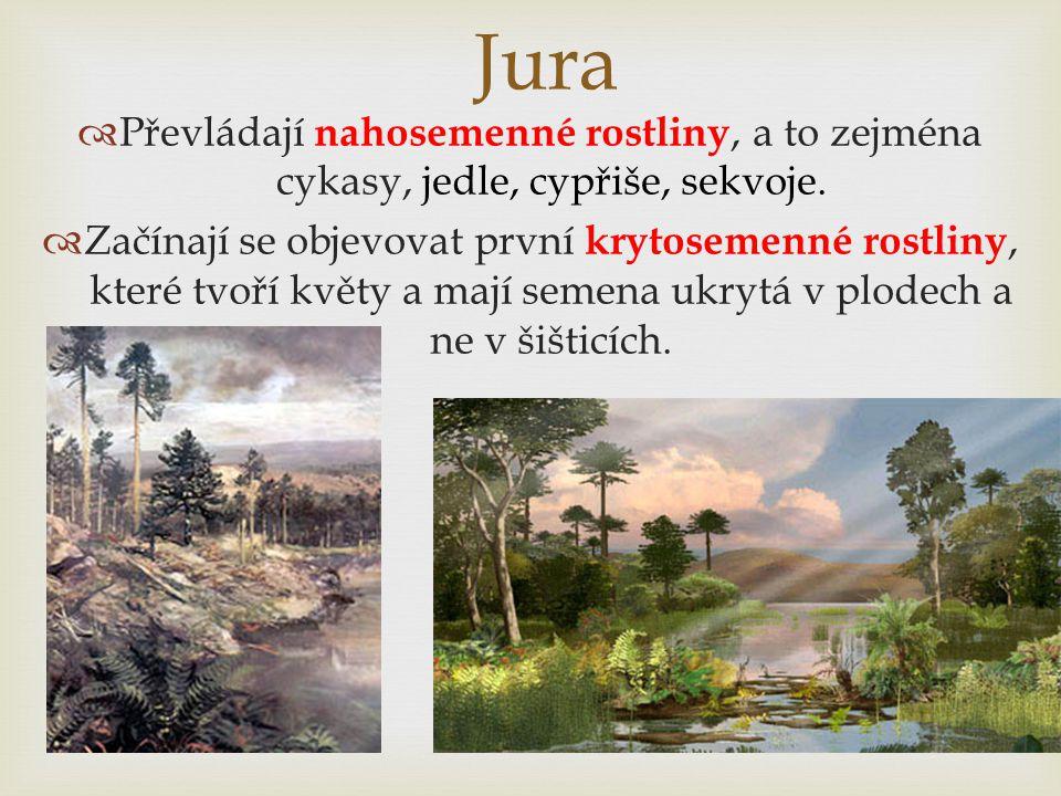 Jura Převládají nahosemenné rostliny, a to zejména cykasy, jedle, cypřiše, sekvoje.