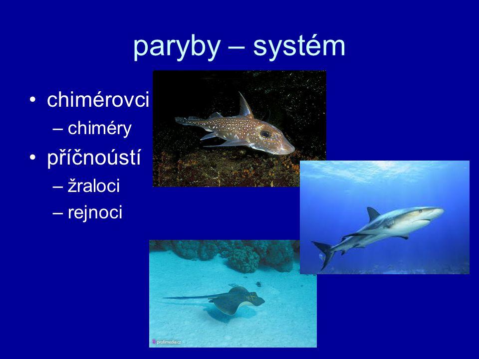 paryby – systém chimérovci chiméry příčnoústí žraloci rejnoci