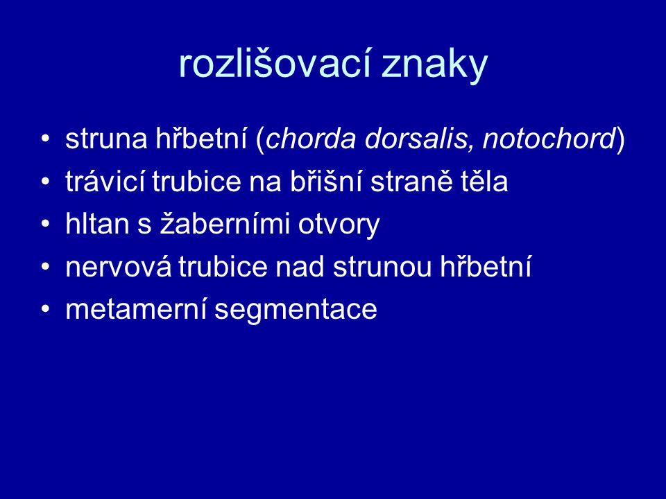 rozlišovací znaky struna hřbetní (chorda dorsalis, notochord)