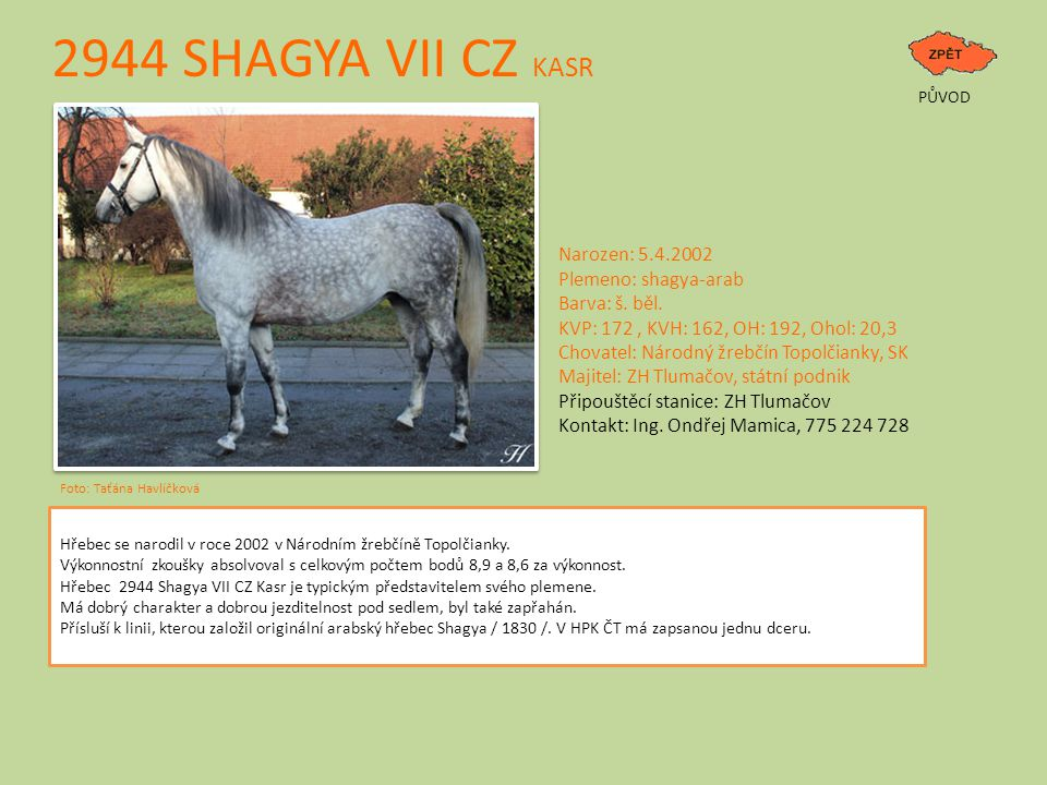 2944 SHAGYA VII CZ KASR Narozen: 5.4.2002 Plemeno: shagya-arab