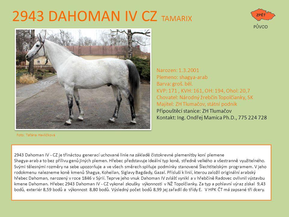 2943 DAHOMAN IV CZ TAMARIX Narozen: 1.3.2001 Plemeno: shagya-arab