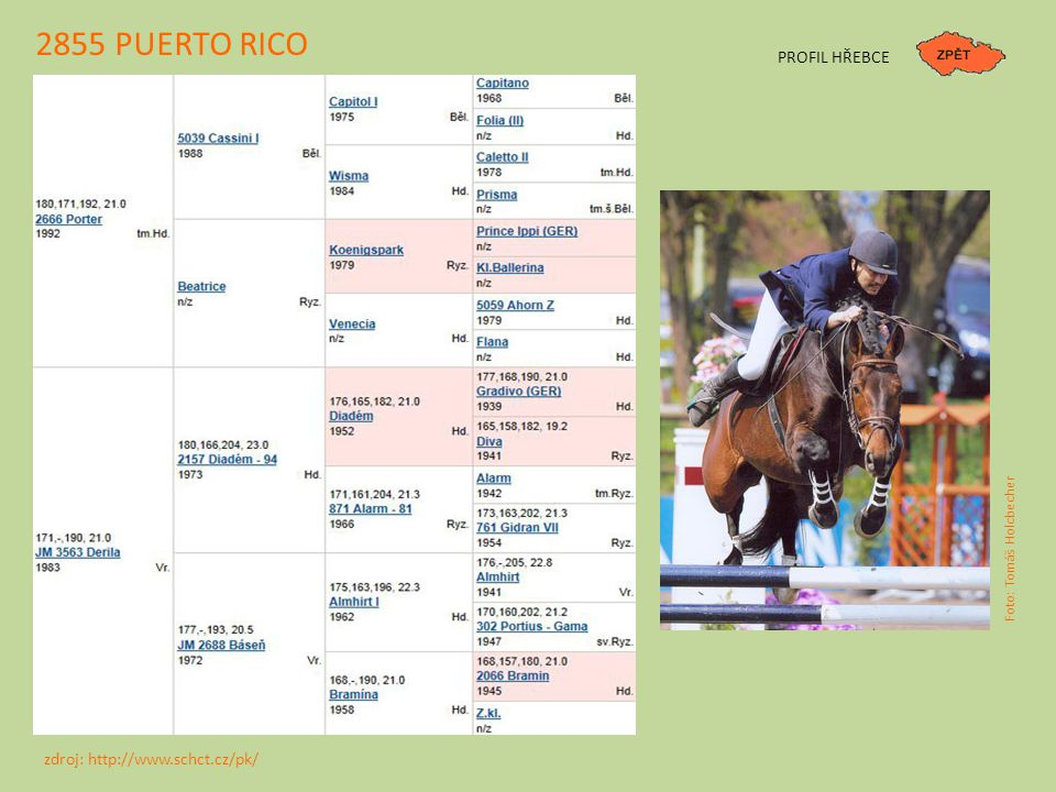 2855 PUERTO RICO PROFIL HŘEBCE zdroj: http://www.schct.cz/pk/