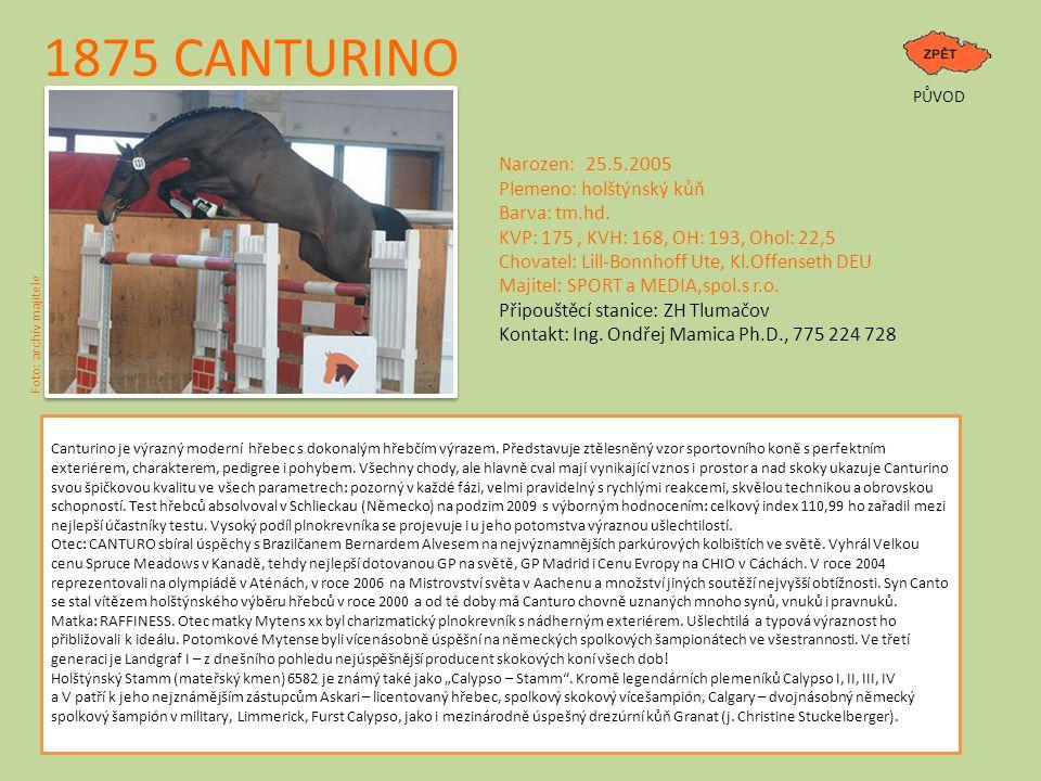 1875 CANTURINO Narozen: 25.5.2005 Plemeno: holštýnský kůň