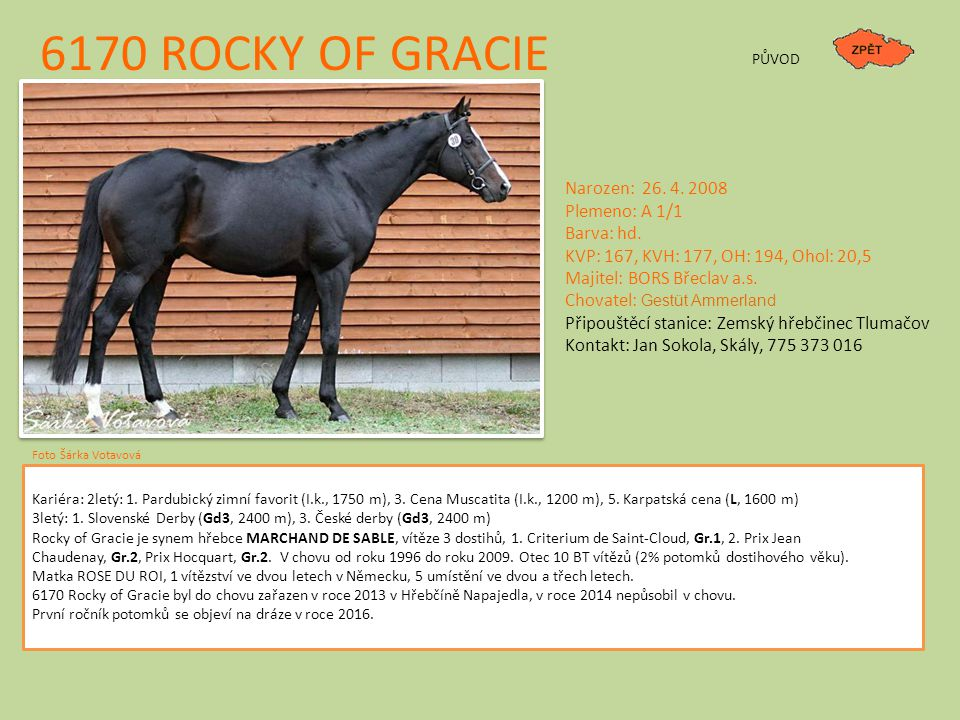 6170 ROCKY OF GRACIE Narozen: 26. 4. 2008 Plemeno: A 1/1 Barva: hd.
